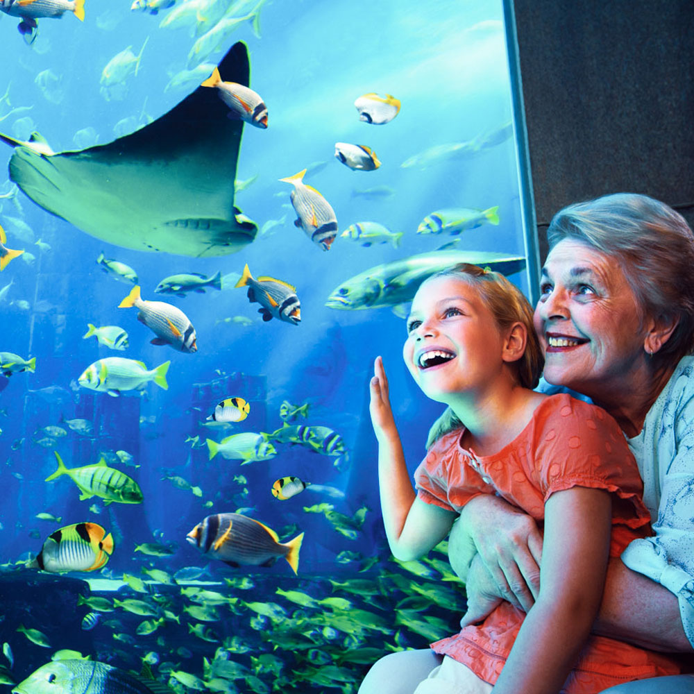 https://www.tripxtours.com/dubai-tours/the-lost-chambers-aquarium tickets